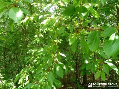 Ruta del Cares - Garganta Divina - Parque Nacional de los Picos de Europa;Vegetación Liébana